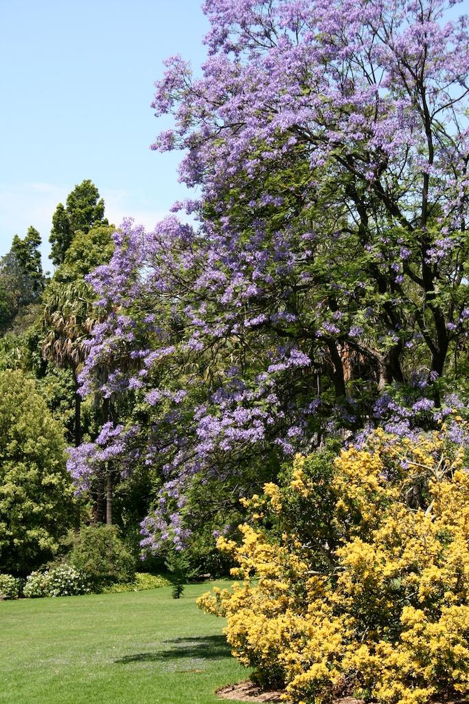 Botanic Gardens Melbourne